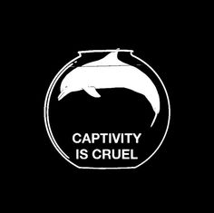via: Black Fish, watch it!  I will never go to another Sea World or captivity attraction again!  Sad