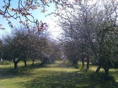 La pomarada de junto a casa.   En El Coto del Pomar. Vistas impresionantes.