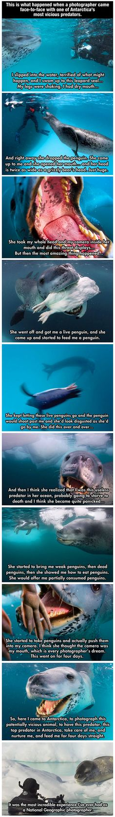 Photographer encounters vicious antarctic predator, who tries to teach him to be a better leopard seal so he'll survive in the wild