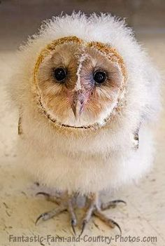 Baby owls | Amazing Birds | Pinterest | Baby Owls, Owl and ...