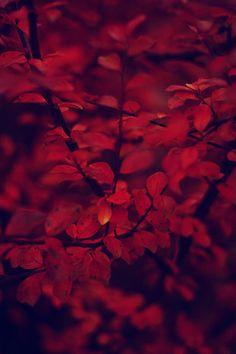 Red Rosso Rouge Rojo R 248 D 赤 Vermelho Color