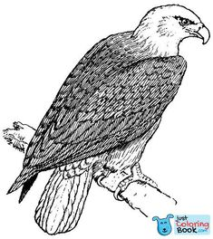 Let's paint eagle coloring pages here. As you know eagles are commonly known as strongest bird of the sky. Eagles have a beautiful royal look. Mandala Coloring Pages, Coloring Pages To Print, Free Printable Coloring Pages, Coloring For Kids, Coloring Pages For Kids, Coloring Books, Mandalas Painting, Mandalas Drawing, Bald Eagle Pictures