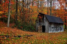 The colors of autumn make everything look stunning, especially if it's old and worn.