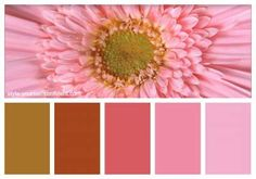 Daisy delight #color analysis in nature