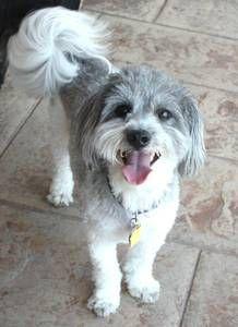 phoenix pets - craigslist | Pets, Dogs, Phoenix