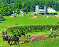 What a beautiful Amish farm! CLICK HERE for more about Ohio's Amish Country at www.OACountry.com! #Amish #Ohio #Tourism (Doyle Yoder photo)