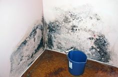 It is time that you became educated on what causes mold growth in your home and where it tends to grow. Be proactive about ridding your home of mold!