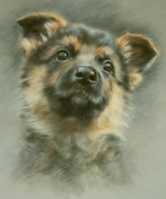 Eight weeks old, Furry friends, Vivien Walters, SAA Professional Members' Galleries