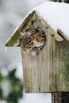 how to build a house for chipmunks