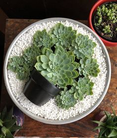 Deco Trend: Small Colorful DIY Succulent Plant Pot in Top .- Deko-Trend: Kleiner bunter DIY-Sukkulenten-Blumentopf im Topf Deco Trend: Small Colorful DIY Succulent Plant Pot in Pot Succulent Gardening, Succulent Terrarium, Garden Pots, Container Gardening, Organic Gardening, Succulent Outdoor, Dish Garden, Indoor Gardening, Mini Cactus Garden