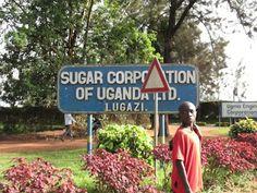 Ohitimme matkalla sokeritehtaan, missä sinänsä ei ole mitään ihmeellistä. Keskustelua ja vastalauseita ovat sen sijaan herättäneet toimet, joilla Ugandan hallinto on luovuttamassa kyseiselle tehtaalle kolmanneksen läheisestä luonnonsuojelualueesta Mabira-metsästä sokeriruon viljelyyn. Hanke on herättänyt suuren haloon, sillä kyseessä on yksi harvoista säilyneistä trooppisista metsistä Afrikassa.