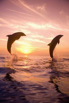 Dolphins in Honduras. By Danita Delimont. Proteccion animal conservacion ambiental http://www.quierounplanetaverde.com/