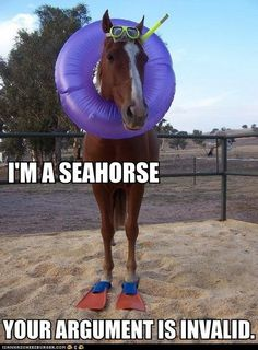 Funny Animal Captions - Animal Capshunz: See? Horse!