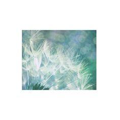 Dandelion Seeds Dandelion Photography Canvas Photo Print Dandelion... ($27) via Polyvore featuring home, home decor, wall art, canvas wall art, dandelion wall art, photography wall art, photographic wall art and canvas home decor