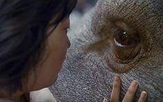 'Okja' é o novo filme da Netflix. Com tema importante, ótimas atuações e uma bela fotografia, 'Okja' representou muito bem a Netflix em Cannes. Confira a nossa crítica completa  https://minhavisaodocinema.blogspot.com.br/2017/06/critica-okja-2017-de-bong-joon-ho.html  #blog #minhavisaodocinema #mvdc #follow #insta #cannes #festivaldecannes #cinema #cinema2017 #filmes #movies #cult #coreia #cinemacoreano #coreanmovies #critica #okja #fantasia #fantasy #aventura #drama #ficçaocientifica #scifi