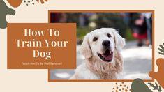 Dog Training Methods, Dog Training Classes, Training Your Dog, Funny Animal Videos, Videos Funny, Funny Animals, Cute Animals, Funny Dogs, Cute Dogs