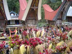 Ceremonia de la étnia Toraja, cerca de Rantepao en Sulawesi