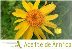 Aceite Vegetal de Árnica, el preferido por los deportistas. Visita nuestro blog http://wp.me/p3EEwy-hn