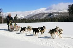 "Mt. Tremblant's Dog-Sledding made the list!! ""11 Bucket List Adventures you can actually Afford""  #Tremblant #CollegeXBreaks"