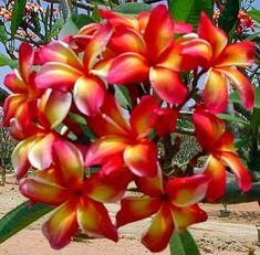 exotic flowers names and pictures Rare Flowers, Exotic Flowers, Tropical Flowers, Amazing Flowers, Beautiful Flowers, Hawaiin Flowers, Plumeria Flowers, Hibiscus, Tiare Tahiti