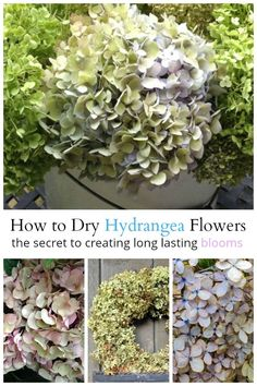 Flower Garden Learn the secret for drying hydrangeas that will last for a long time. They will look great in wreaths, and vignettes all over your home. Diy Garden Projects, Garden Crafts, Garden Art, Garden Tips, Garden Ideas, Garden Paths, Garden Design, Hortensia Hydrangea, Hydrangea Flower