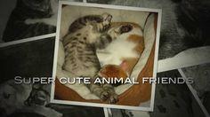 Super cute animal friends
