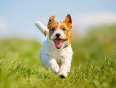 יום הכלב הבינלאומי: לפנק, לפנק, לפנק
