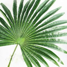 Giant real touch fan palm leaf. Amazing table centrepiece or arch foliage for a tropical luau, beach party, wedding. Artificial leaves by BethanyClaireCakes on Etsy