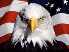 American Bald Eagle Wallpapers - Wallpaper Cave