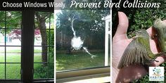 How To Prevent Bird Window Collisions | Habitat-Landscapes.com