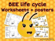 Bee Life Cycle: Free Printable.  Use Life cycle for Anchor Chart