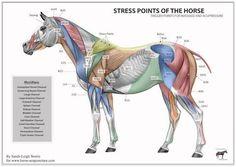 Afbeeldingsresultaat voor triggerpoint paard