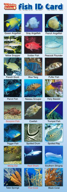 Cayman Fish Guide