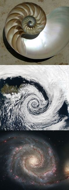 Pantheism & the Fibonacci Sequence. Everywhere you look, there it is. Discuss...