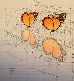 Coloring Fibonacci In Nature New Rafael Araujo Draws Perfect Illustrations by Hand Using Geometry Art, Sacred Geometry, Mathematical Drawing, Fibonacci In Nature, Sacred Architecture, Math Art, Insect Art, Technical Drawing, Nocturne