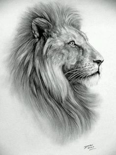 texture lion tattoo leon drawings sketches tattoos and body art lion Animal Sketches, Art Drawings Sketches, Animal Drawings, Pencil Drawings, Lion Images, Lion Pictures, Leo Tattoos, Animal Tattoos, Image Elephant