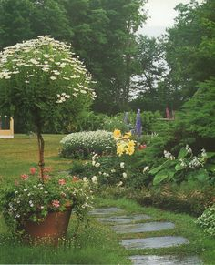 Image result for daisy topiary