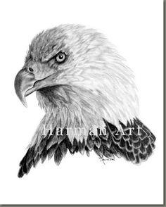How to Draw a Eagle | female bald eagle this female bald eagle won the hearts of many people ...