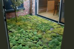 plants - ground cover