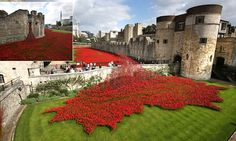 Tide of red poppies sweeps across Tower of London for Armistice Day  Click on image to view further images.