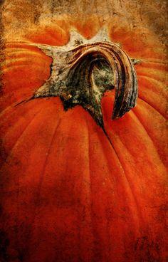 Great pumpkin!