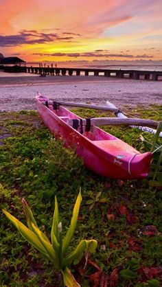 !pink outrigger!