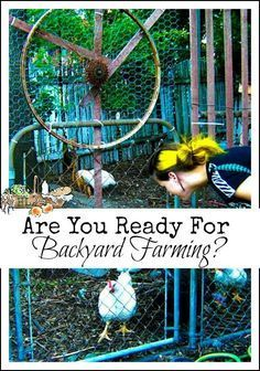 Are you ready for Backyard Farming l Review of Backyard Farming on an Acre More or Less l Homestead Lady (.com)