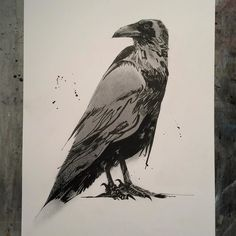commission #crow #ink #graphite by jeremysorrell