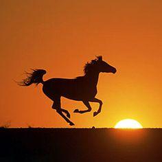 Me gustan por que me parecen animales fuertes pero vulnerables, expresan para mí muy bien el concepto de libertad.