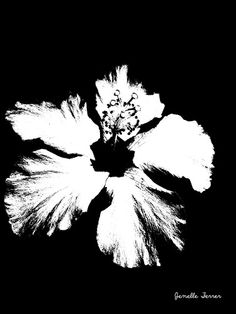 Black and white flower | Jenelles Photography