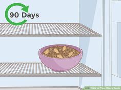 How to Plant Cherry Seeds (with Pictures) - wikiHow Cherry Tree From Seed, Growing Cherry Trees, Cherry Seeds, How To Grow Cherries, Sweet Cherries, Comment Planter, Peat Moss, Sour Cherry, Garden Yard Ideas