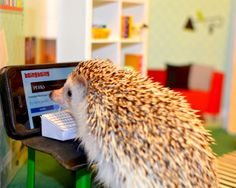 """https://flic.kr/p/uqMGvQ 