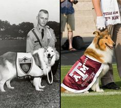 "Reveille, the first lady of Aggieland, is the official mascot of Texas A As a five-star general, she is the highest ranking member of the Corps of Cadets.The first Reveille came to Texas A in January 1931. A group of cadets hit a small black and white dog on the road, picked her up and brought her back to school so they could care for her. She got her name the next morning: when ""Reveille"" was blown by a bugler, she started barking."