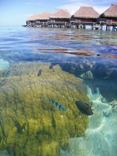 Underwater in the lagoon - Hilton Moorea Lagoon Resort Spa, Moorea, French Polynesia